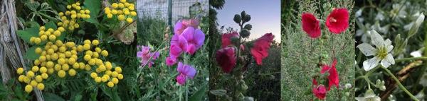 Fleurs Montreuil